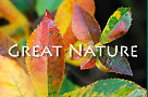 great nature